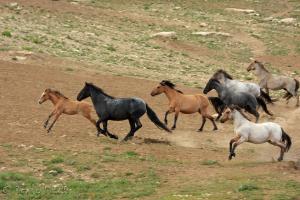 horse-herd-17